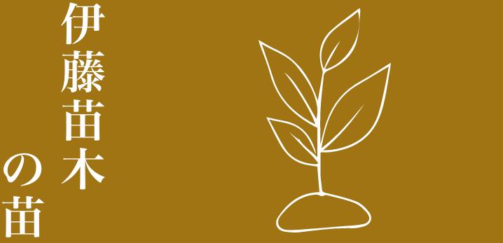 野菜の苗木
